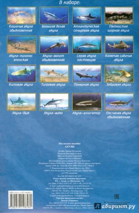 Иллюстрация 1 из 8 для Наглядное пособие А4. Акулы | Лабиринт - книги. Источник: Лабиринт