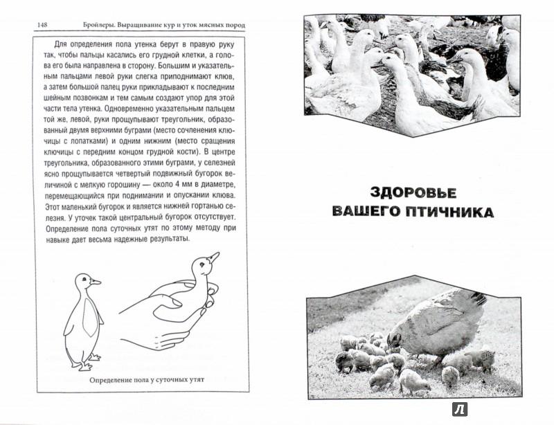 Иллюстрация 1 из 8 для Бройлеры. Выращивание кур и уток мясных пород - Александр Ващенков | Лабиринт - книги. Источник: Лабиринт