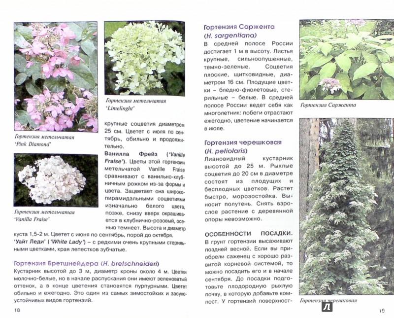 Иллюстрация 1 из 8 для Сирень, гортензии и другие красивоцветущие кустарники - Майя Александрова   Лабиринт - книги. Источник: Лабиринт