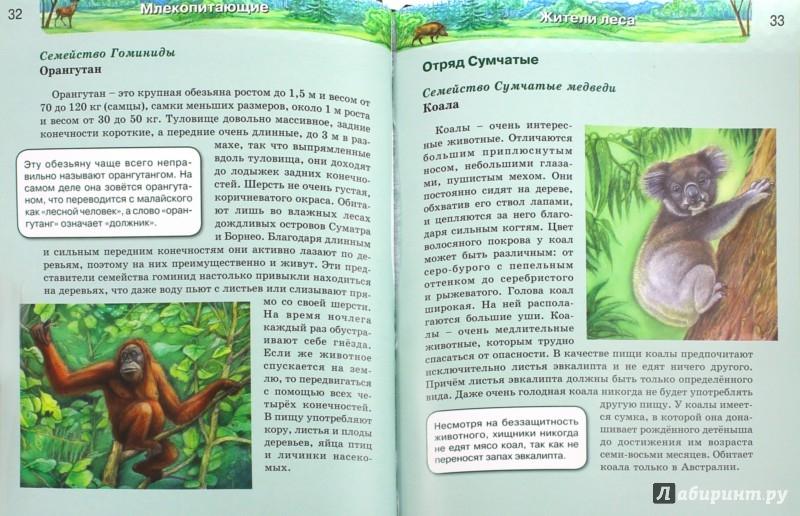 Иллюстрация 1 из 51 для Млекопитающие | Лабиринт - книги. Источник: Лабиринт