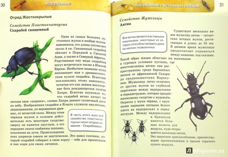 Иллюстрация 1 из 52 для Насекомые   Лабиринт - книги. Источник: Лабиринт