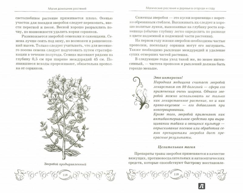 Иллюстрация 1 из 12 для Магия домашних растений - М. Василенко | Лабиринт - книги. Источник: Лабиринт