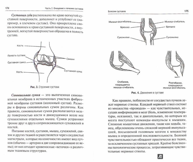 Иллюстрация 1 из 6 для СТОП-болезнь! Вылечи суставы и органы пищеварения - Анатолий Маловичко | Лабиринт - книги. Источник: Лабиринт