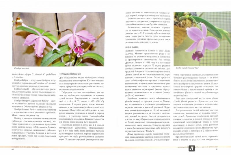 Иллюстрация 1 из 14 для Самые восхитительные орхидеи - Ирина Зайцева | Лабиринт - книги. Источник: Лабиринт