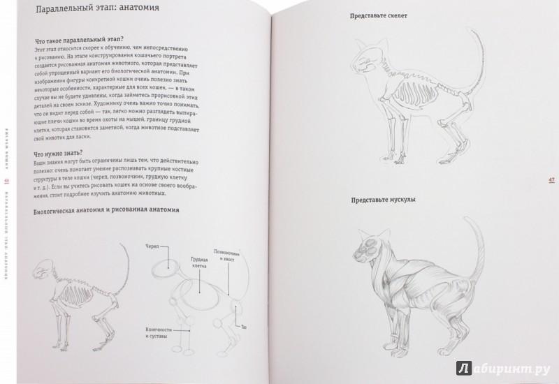 Иллюстрация 1 из 18 для Рисуем кошку за 15 минут - Джек Спайсер | Лабиринт - книги. Источник: Лабиринт