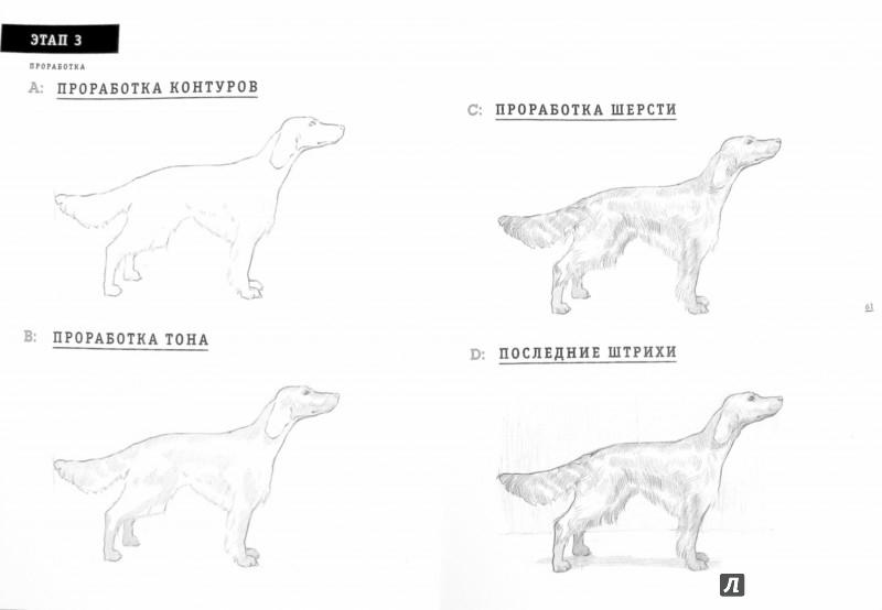 Иллюстрация 1 из 20 для Рисуем собаку за 15 минут - Джек Спайсер | Лабиринт - книги. Источник: Лабиринт