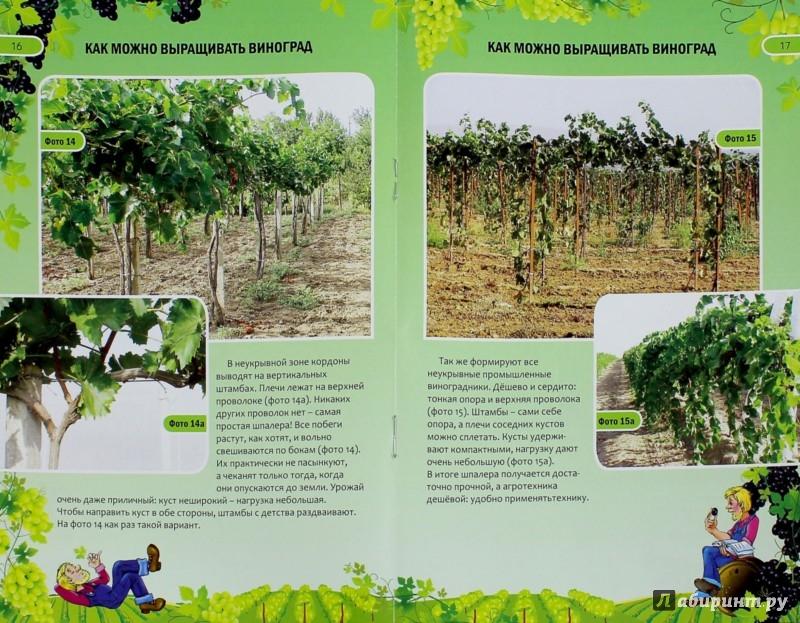 Иллюстрация 1 из 8 для Как можно выращивать виноград - Николай Курдюмов | Лабиринт - книги. Источник: Лабиринт