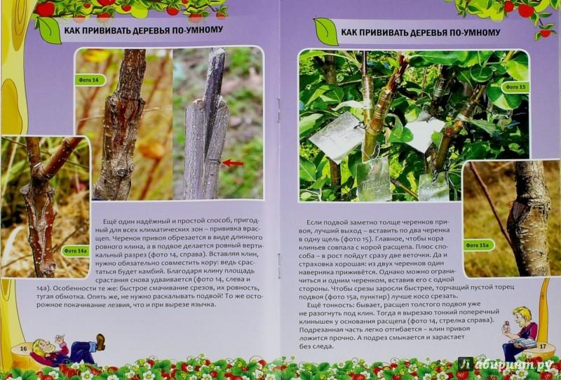 Иллюстрация 1 из 8 для Как прививать деревья по-умному - Николай Курдюмов | Лабиринт - книги. Источник: Лабиринт