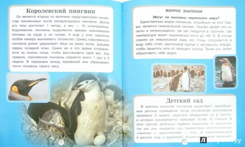 Иллюстрация 1 из 16 для Птицы - Дмитрий Кошевар | Лабиринт - книги. Источник: Лабиринт