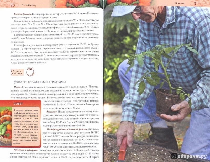 Иллюстрация 1 из 6 для Огурцы, томаты, перец. Секреты сверхурожая - Ольга Городец | Лабиринт - книги. Источник: Лабиринт