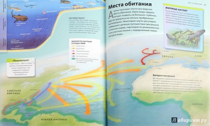 Иллюстрация 1 из 19 для Акулы | Лабиринт - книги. Источник: Лабиринт
