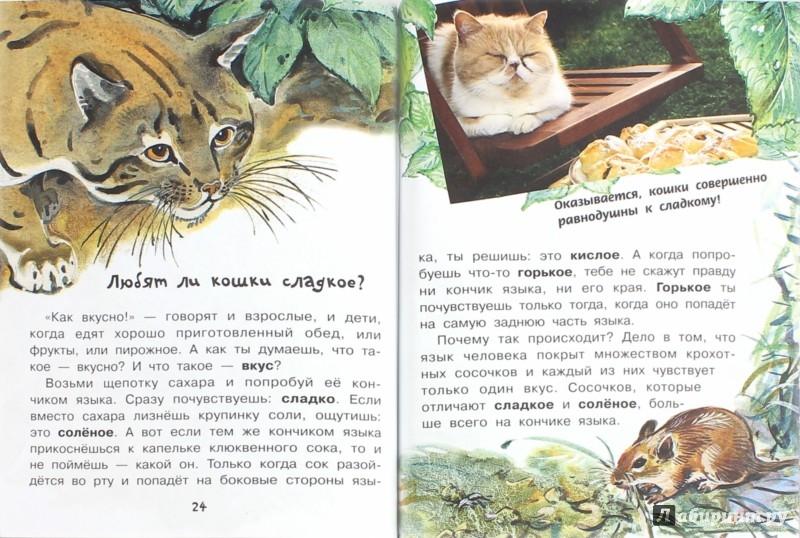 Для чего коту усы танасийчук