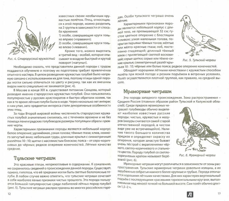 Иллюстрация 1 из 6 для Разведение домашних голубей - Каминская, Вальтер | Лабиринт - книги. Источник: Лабиринт