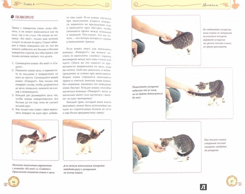 Иллюстрация 1 из 32 для Дрессируем кошку за 10 минут - Мириам Филдс-Бабино | Лабиринт - книги. Источник: Лабиринт