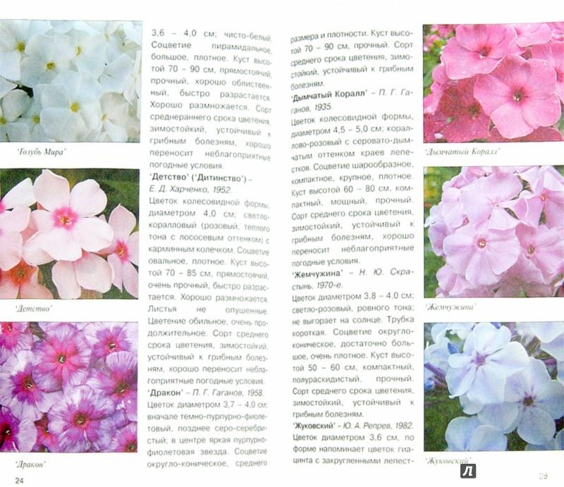 Иллюстрация 1 из 21 для Флоксы - Игорь Матвеев | Лабиринт - книги. Источник: Лабиринт