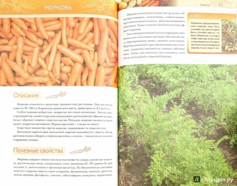 Иллюстрация 1 из 24 для Картофель, морковь, свекла. Секреты сверхурожая - Ольга Городец | Лабиринт - книги. Источник: Лабиринт
