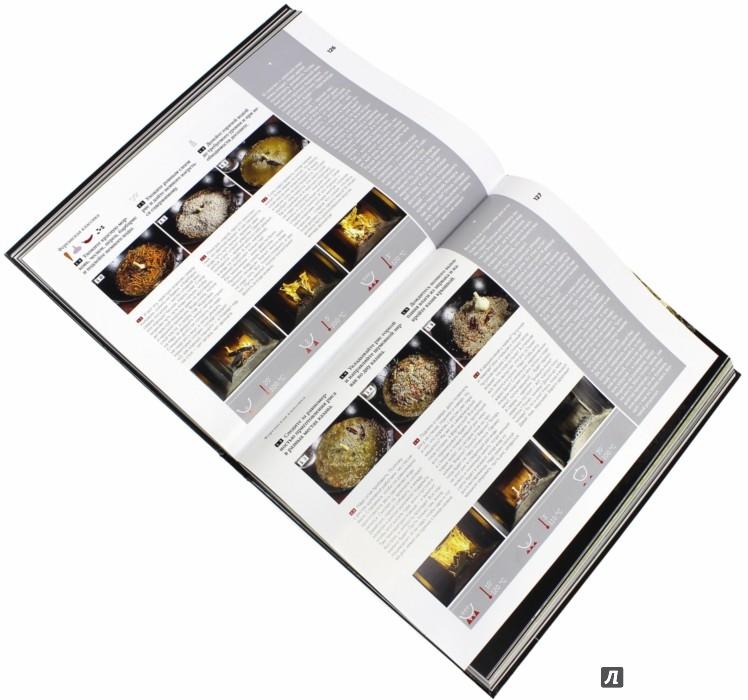 Иллюстрация 1 из 13 для Плов. Кулинарное исследование - Сталик Ханкишиев | Лабиринт - книги. Источник: Лабиринт