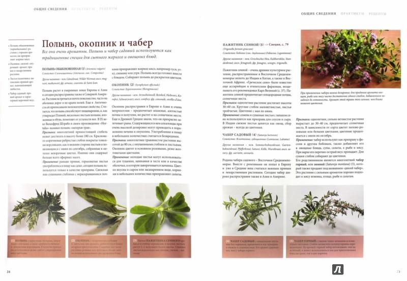 Иллюстрация 1 из 2 для Специи. Большая кулинарная книга | Лабиринт - книги. Источник: Лабиринт