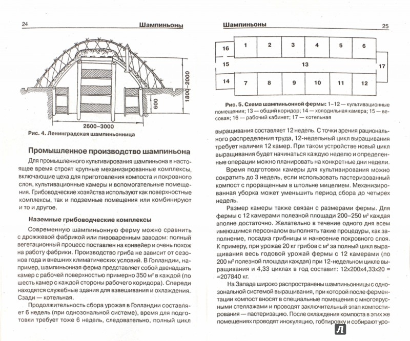 Иллюстрация 1 из 12 для Грибы на грядке - Александр Морозов | Лабиринт - книги. Источник: Лабиринт
