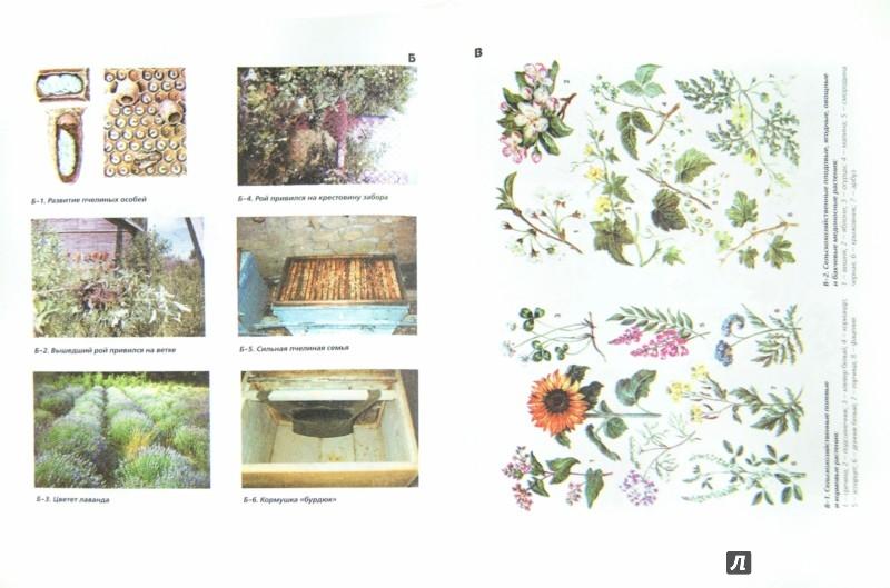 Иллюстрация 1 из 10 для Пчеловодство - Черевко, Аветисян | Лабиринт - книги. Источник: Лабиринт