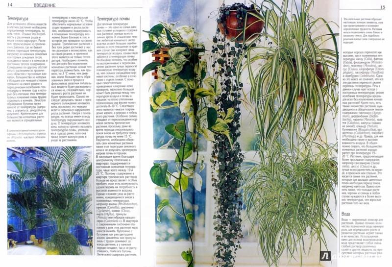 Иллюстрация 1 из 4 для Все о комнатных растениях | Лабиринт - книги. Источник: Лабиринт