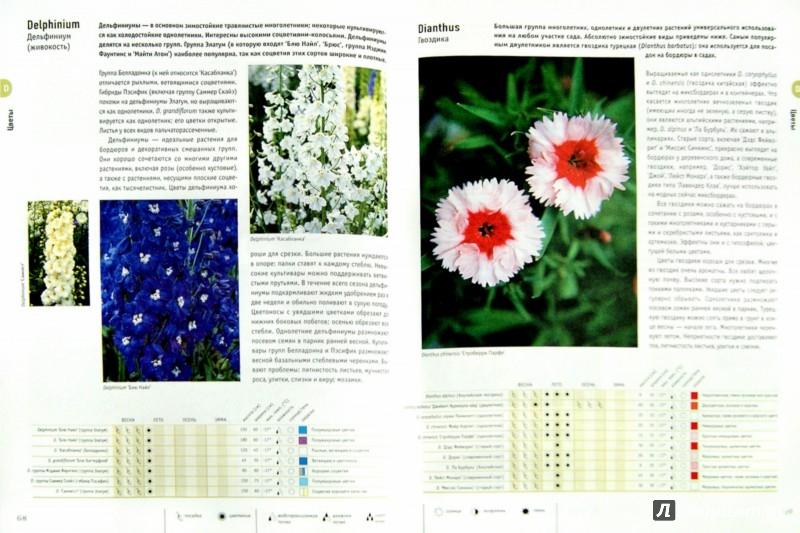 Иллюстрация 1 из 5 для Цветы - Алан Тугуд | Лабиринт - книги. Источник: Лабиринт