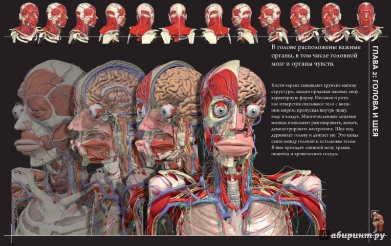 Иллюстрация 1 из 30 для Анатомия человека 360°. Иллюстрированный атлас - Джейми Роубак | Лабиринт - книги. Источник: Лабиринт