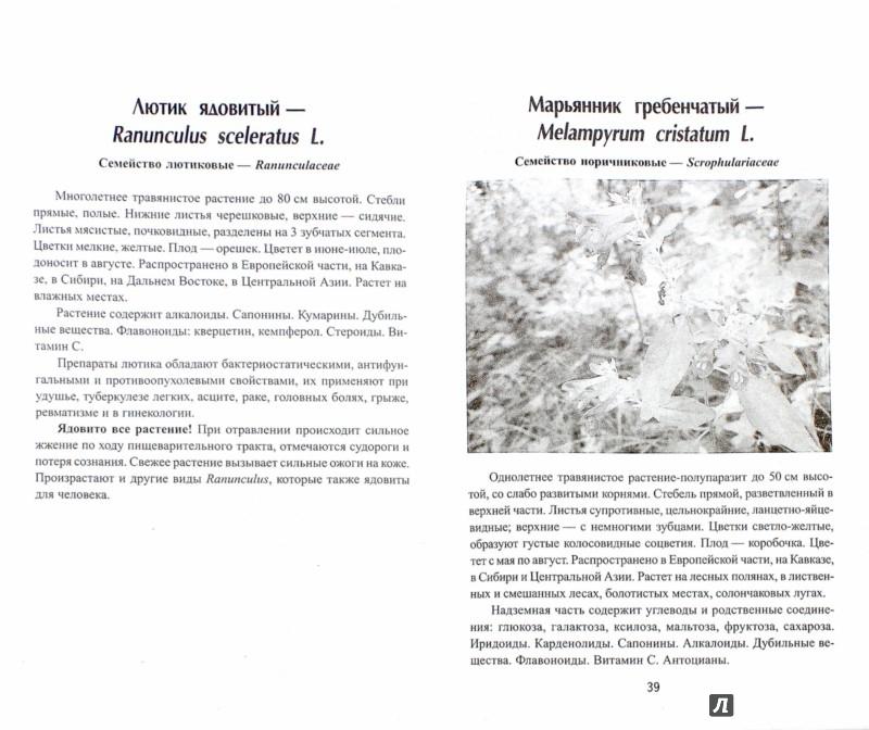 Иллюстрация 1 из 4 для Ядовитые растения России - Евгений Пикунов | Лабиринт - книги. Источник: Лабиринт