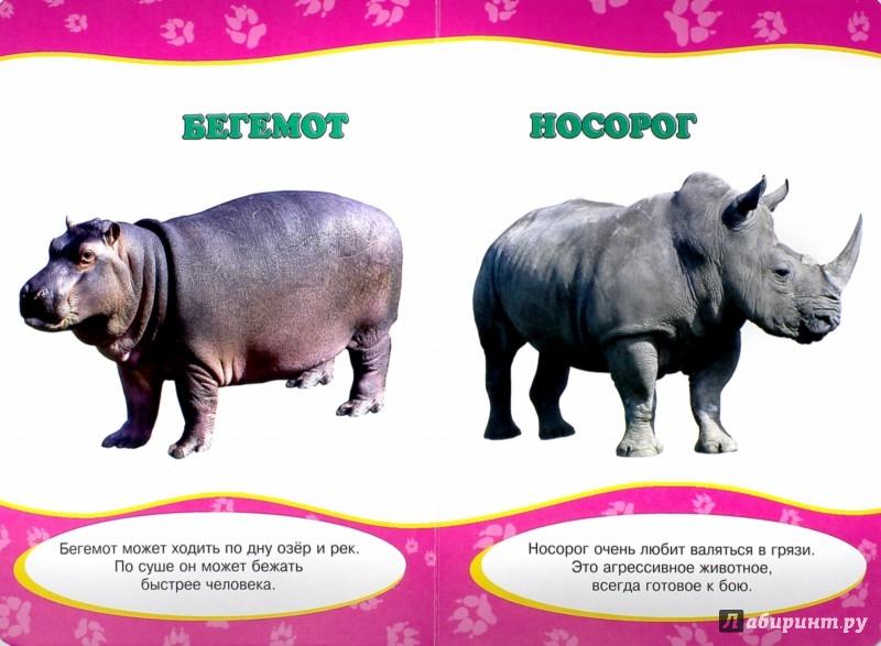 Иллюстрация 1 из 8 для Картонка. Обо всем на свете. Животные | Лабиринт - книги. Источник: Лабиринт