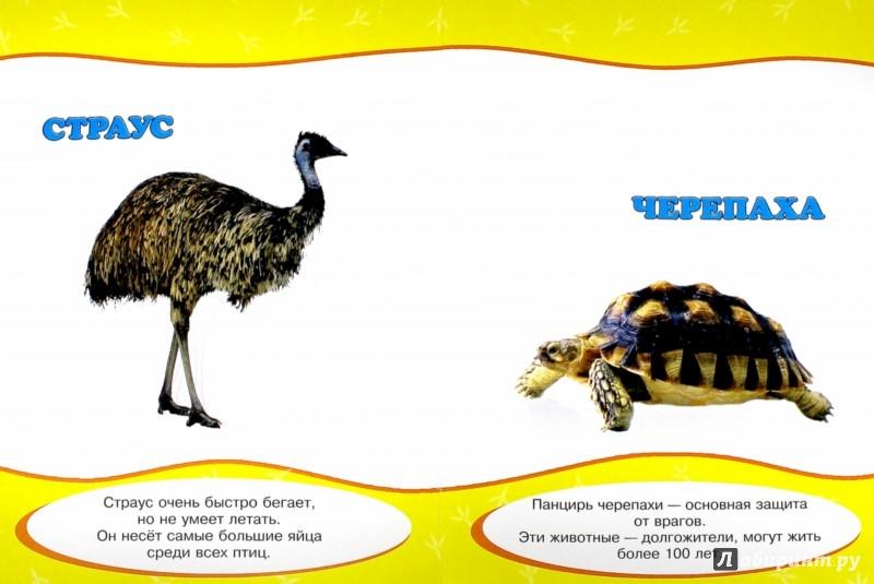 Иллюстрация 1 из 18 для Картонка. Обо всем на свете. Такие разные животные | Лабиринт - книги. Источник: Лабиринт