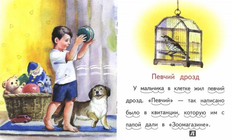Иллюстрация 1 из 17 для Модница белка - Владимир Степанов | Лабиринт - книги. Источник: Лабиринт