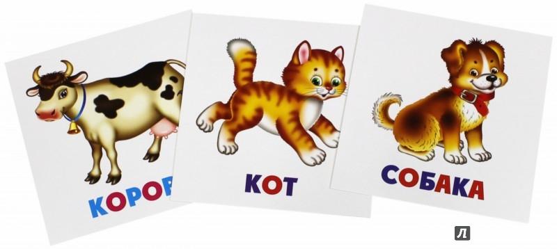 Иллюстрация 1 из 14 для Развивающие карточки Домашние животные (12 штук) (37272-50) | Лабиринт - книги. Источник: Лабиринт