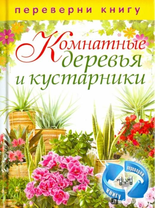 Иллюстрация 1 из 12 для Цветы на вашем участке. Комнатные деревья и кустарники | Лабиринт - книги. Источник: Лабиринт