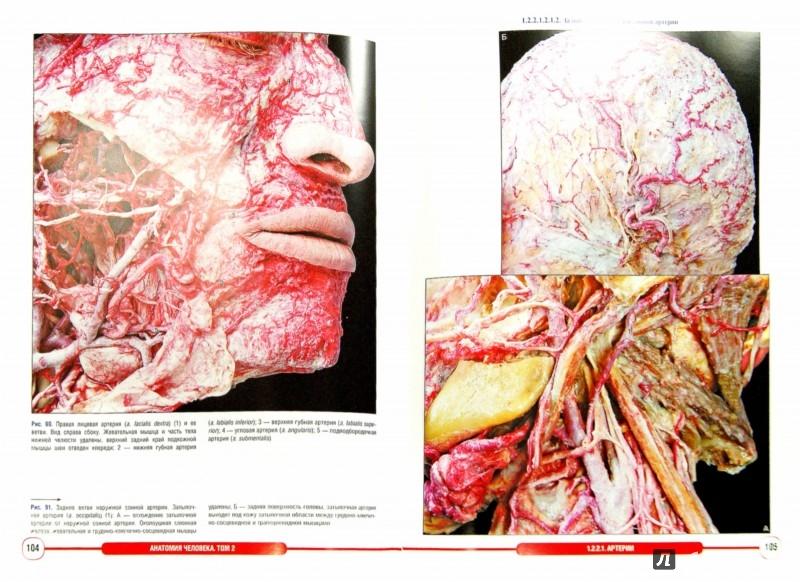 Иллюстрация 1 из 16 для Анатомия человека. Фотографический атлас. В 3-х томах. Том 2. Сердечно-сосудистая система - Борзяк, Гунтер, Путалова | Лабиринт - книги. Источник: Лабиринт