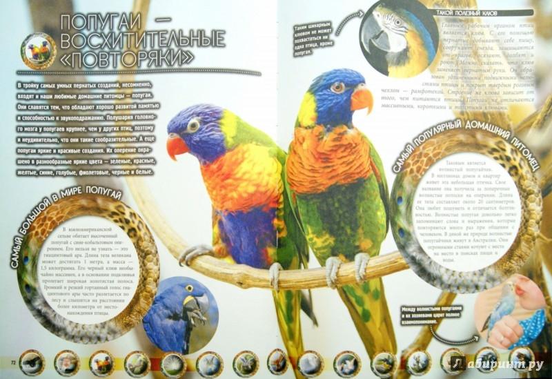 Иллюстрация 1 из 5 для Животные - Дмитрий Кошевар | Лабиринт - книги. Источник: Лабиринт