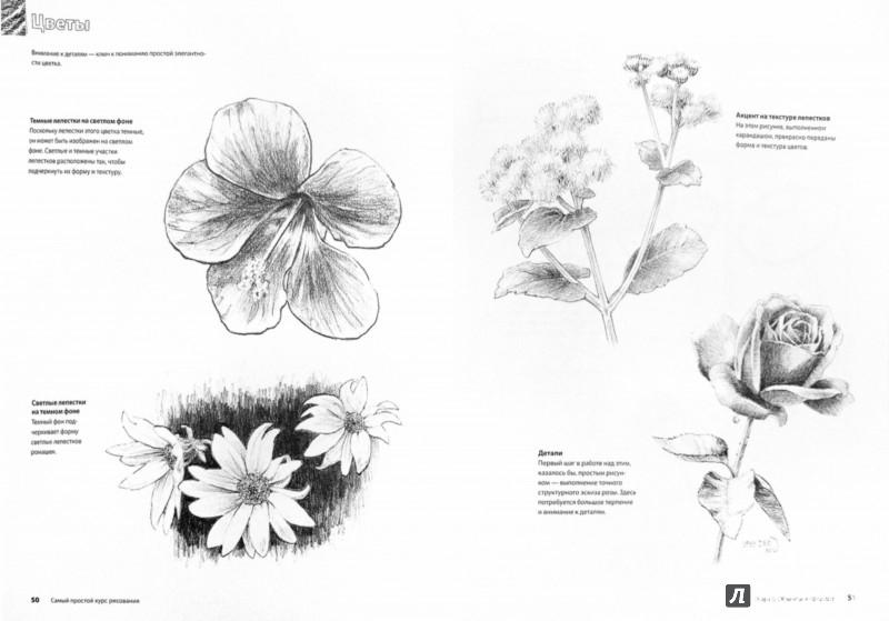 Иллюстрация 1 из 13 для Самый простой курс рисования - Вилленбринк, Вилленбринк | Лабиринт - книги. Источник: Лабиринт