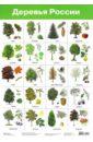Плакат Деревья России (2883)