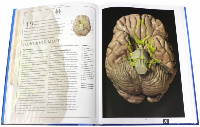 Иллюстрация 1 из 3 для Новый атлас анатомии человека | Лабиринт - книги. Источник: Лабиринт