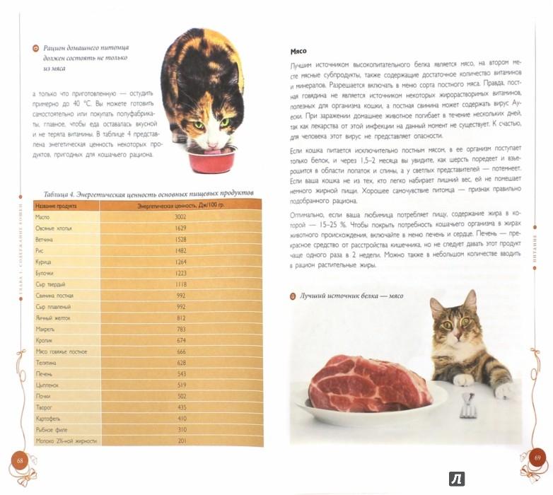 Иллюстрация 1 из 17 для Все о кошках - Светлана Дудникова | Лабиринт - книги. Источник: Лабиринт