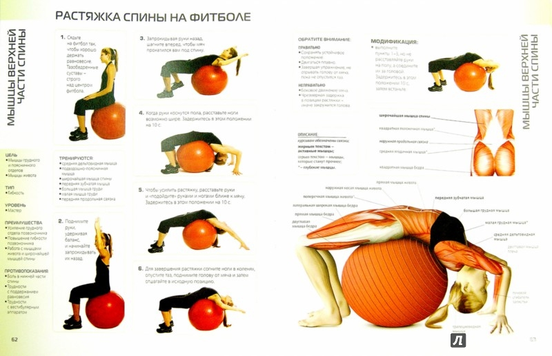 Иллюстрация 1 из 8 для Анатомия упражнений для спины - Филипп Стриано | Лабиринт - книги. Источник: Лабиринт