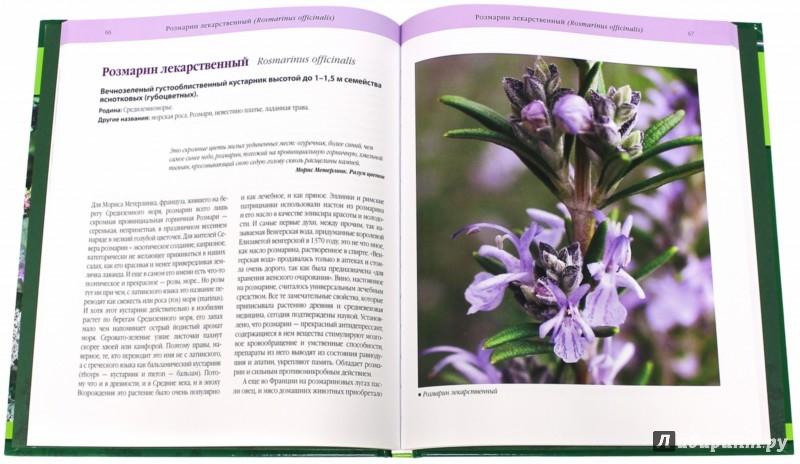 Иллюстрация 1 из 21 для Пряные травы в вашем саду - Ольга Уварова | Лабиринт - книги. Источник: Лабиринт