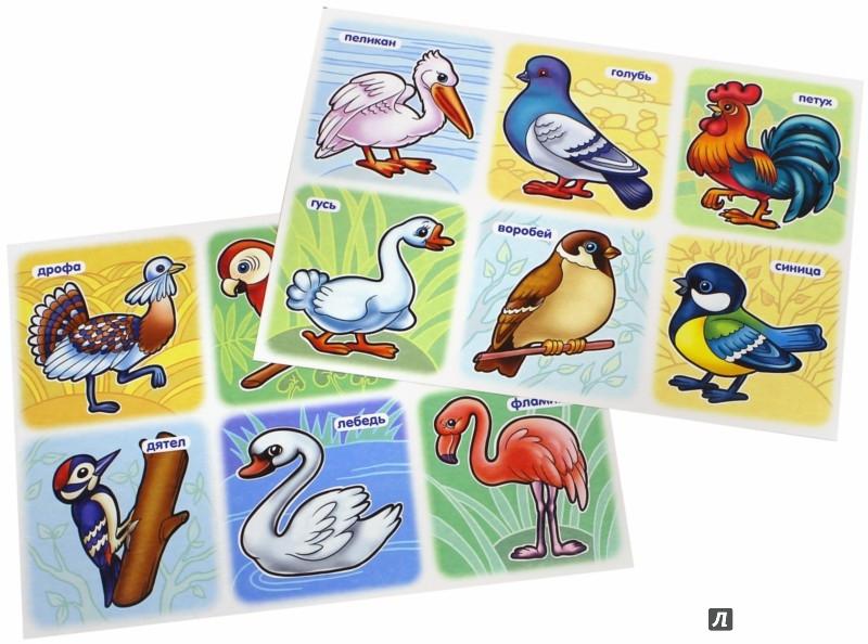 Иллюстрация 1 из 7 для Развивающее лото. Птицы | Лабиринт - игрушки. Источник: Лабиринт
