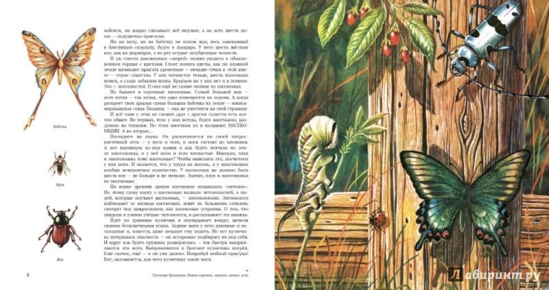 Иллюстрация 1 из 22 для Энтомология в картинках - Виталий Танасийчук | Лабиринт - книги. Источник: Лабиринт