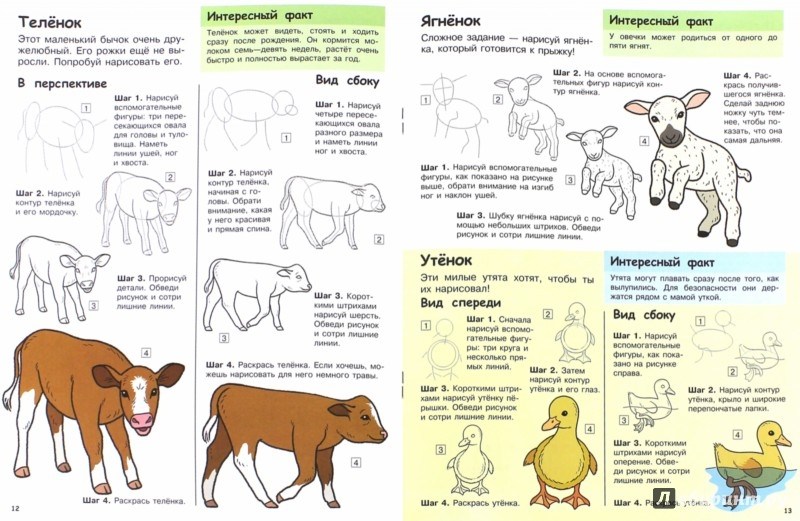 Иллюстрация 1 из 26 для Учимся рисовать. Зверята | Лабиринт - книги. Источник: Лабиринт