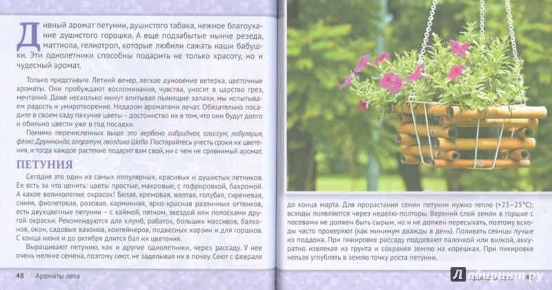Иллюстрация 1 из 14 для Цветы для оформления балкона, лоджии, веранды | Лабиринт - книги. Источник: Лабиринт