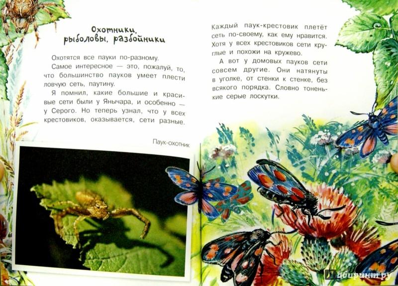 Иллюстрация 1 из 23 для Кто развесил в лесу кружева? - Юрий Аракчеев | Лабиринт - книги. Источник: Лабиринт