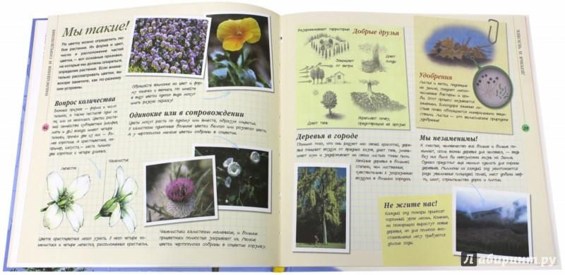 Иллюстрация 1 из 2 для Растения | Лабиринт - книги. Источник: Лабиринт