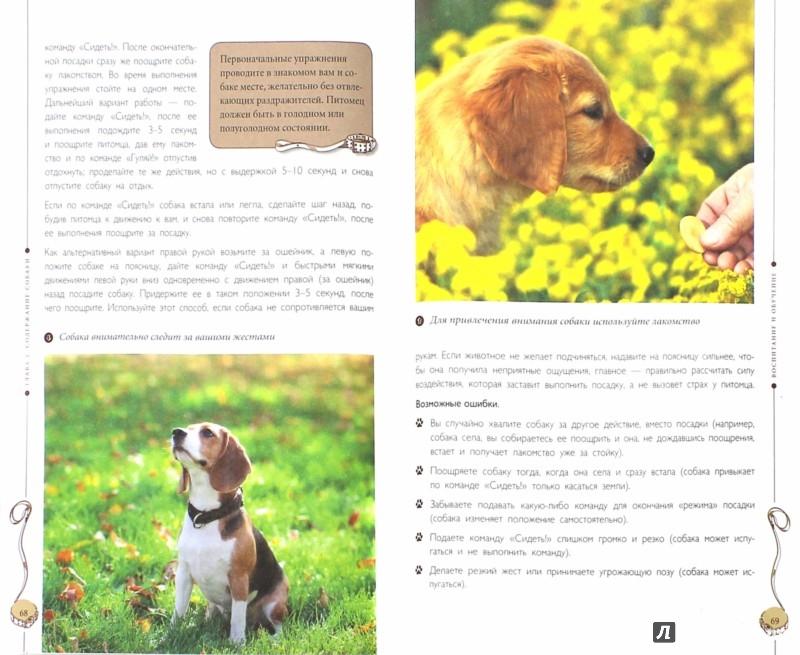 Иллюстрация 1 из 5 для Все о собаках - Круковер, Шкляев | Лабиринт - книги. Источник: Лабиринт
