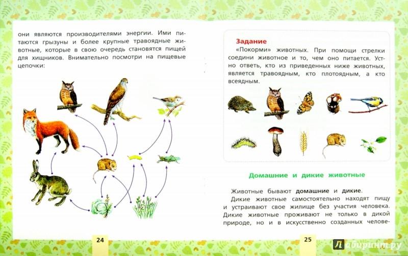 Иллюстрация 1 из 5 для Окружающий мир. Растения и животные. Для начальной школы | Лабиринт - книги. Источник: Лабиринт