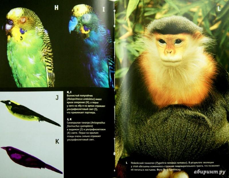 Иллюстрация 1 из 31 для Приспособиться и выжить! ДНК как летопись эволюции - Шон Кэрролл | Лабиринт - книги. Источник: Лабиринт